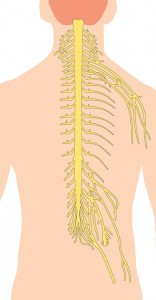 A cervical epidural injection is performed to relieve neck, upper back, and arm pain.